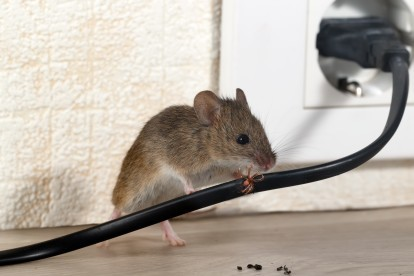 Pest Control in Stockwell, SW9. Call Now! 020 8166 9746