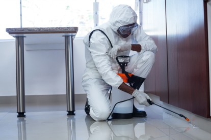 Emergency Pest Control, Pest Control in Stockwell, SW9. Call Now 020 8166 9746