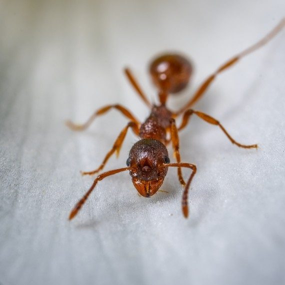 Field Ants, Pest Control in Stockwell, SW9. Call Now! 020 8166 9746