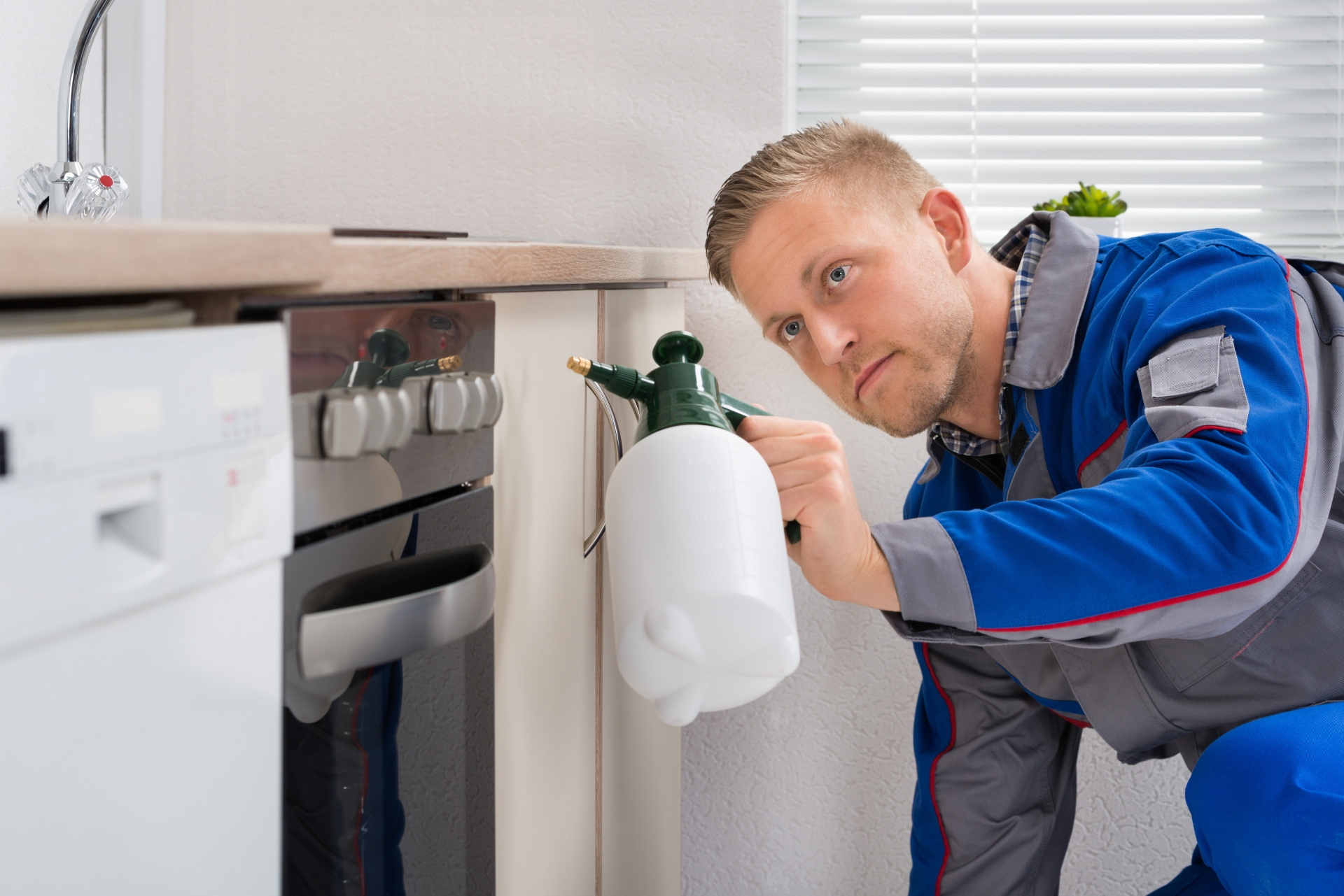 Pest Inspection, Pest Control in Stockwell, SW9. Call Now 020 8166 9746