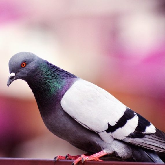 Birds, Pest Control in Stockwell, SW9. Call Now! 020 8166 9746