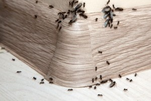 Bed Bugs, Pest Control in Stockwell, SW9. Call Now 020 8166 9746