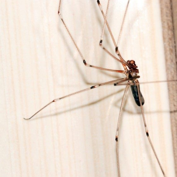 Spiders, Pest Control in Stockwell, SW9. Call Now! 020 8166 9746
